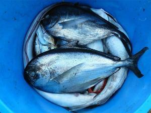 pecanje 1